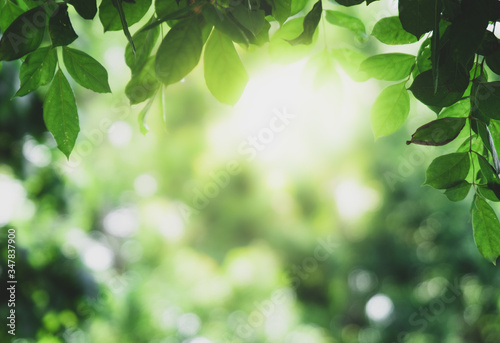Foto Closeup beautiful view of nature green leaves on blurred greenery tree background with sunlight in public garden park