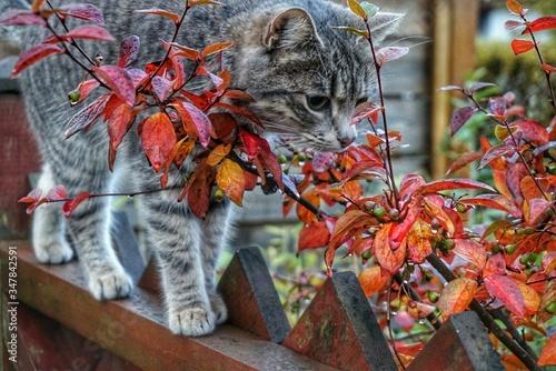 Obraz na płótnie Cat Walking On Wooden Fence In Backyard