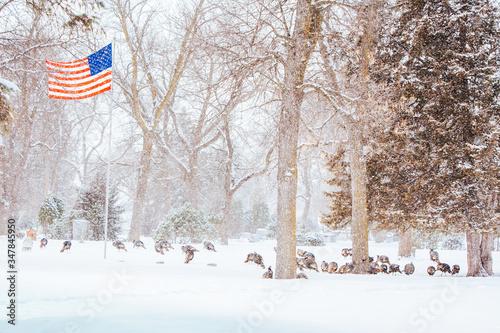 Wild Turkeys In Snow USA Canvas Print