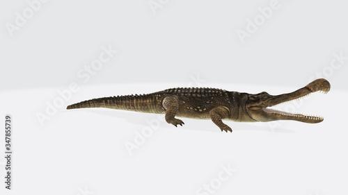 3d illustration of sarcosuchus Fototapet