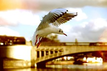 Close-up Of Seagull Landing Against Sky