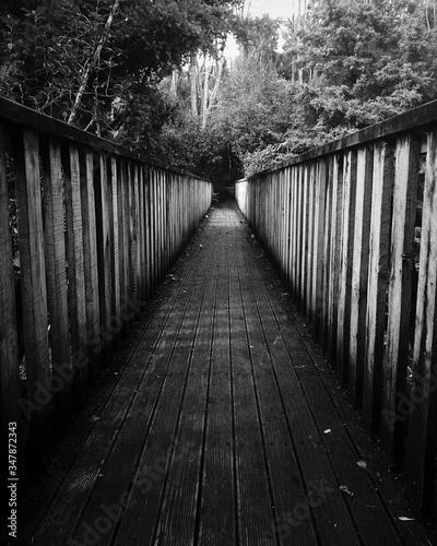 Carta da parati Footbridge Amidst Trees