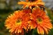 canvas print picture - orange chrysanthemum flower