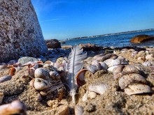 Feather And Seashells On Sandy...