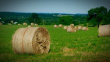 Hay Bales Rolled Up On Field Against Sky
