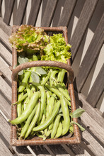 Green Beans In A Basket With Lettuces
