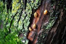 Bugs On Tree Trunk