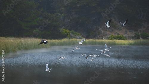 Wallpaper Cobquecura Aves al Vuelo Canvas Print