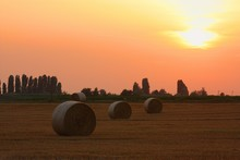 Rolled Bales Of Hay In Field At Sunset