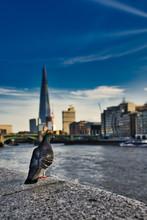 Animals Around City Of London ...