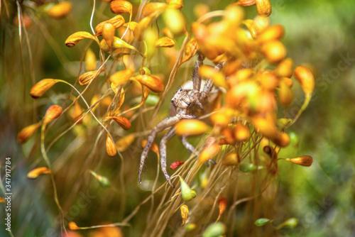big spider crab in yellow moss Wallpaper Mural