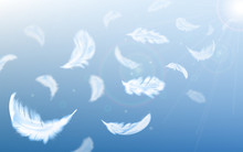 White Feathers Fly In Air On B...