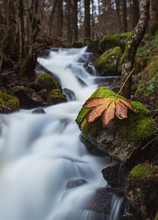 Amazing Scenery Of Narrow River With Waterfall Cascade Flowing Through Mossy Rocky Terrain In Autumn Forest With Dry Leaf On Stone On Foreground
