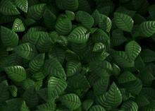 Green Leaves Background 3d Ren...