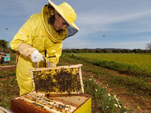 Female Beekeeper In Yellow Pro...
