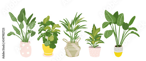 Obraz potted plants collection. succulents and house plants. hand drawn vector illustration. Set of house indoor plant vector cartoon doodle. - fototapety do salonu