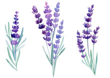 Bouquet Of Lavender Flowers On...