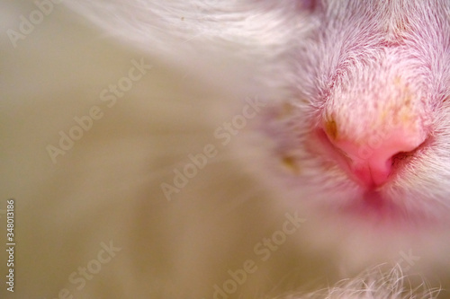 Fotografie, Obraz kitten with runny nose macro color close-up