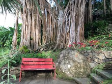 Red Bench By Rock Against Tree...