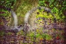 High Angle View Of Squirrel And Pigeon On Field