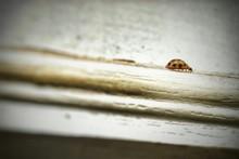 Close-up Of Ladybug On Retaining Wall