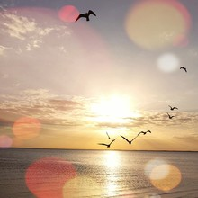 Silhouette Birds Flying Over Sea At Sunset