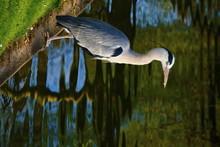 Bird Overlooking Water