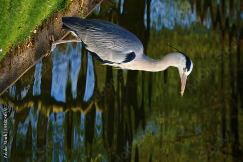 Leinwand Poster Bird Overlooking Water