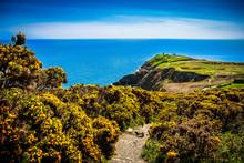 Irish Lighthouse Between Yellow Furze Howth