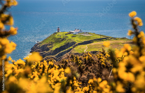 Irish lighthouse in Howth between yellow furze Canvas Print