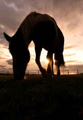 Silhouette Horse On Field Against Cloudy Sky During Sunset
