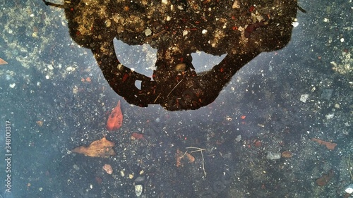 Fotografie, Obraz Reflection Of Man Photographing Puddle