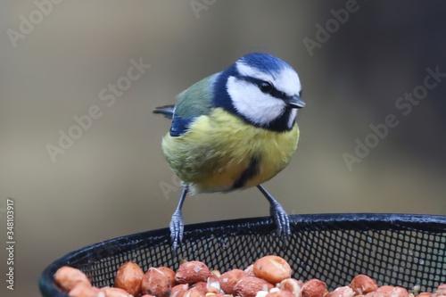Carta da parati Close-up Of Songbird Perching On Feeder