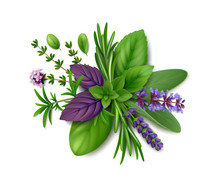 Bunch Of Fresh Herbs De Provence: Rosemary, Summer Savory, Oregano, Thyme, Sage, Lavender, Mint, Marjoram And Basil (green And Purple). Isolated On White Background. Top View. Realistic Illustration.