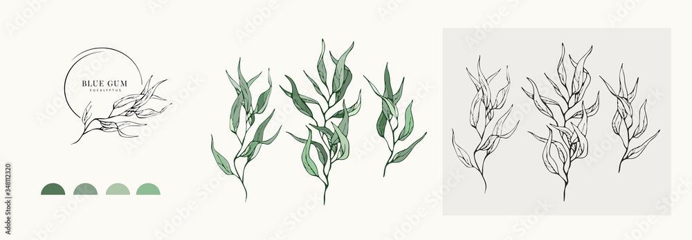 Fototapeta Eucalyptus blue gum logo and branch. Hand drawn wedding herb, plant and monogram with elegant leaves for invitation save the date card design. Botanical rustic trendy greenery