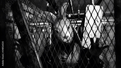 Fotografia Person With Rabbit Mask Seen Through Fence