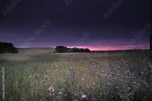 Fototapeta wschód słońca poranek ciemne niebo pola uprawy obraz