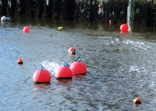 Red Buoys Floating On Sea