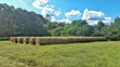 canvas print picture - Hay Bales Arranged On Grassy Field Against Trees