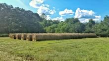 Hay Bales Arranged On Grassy F...