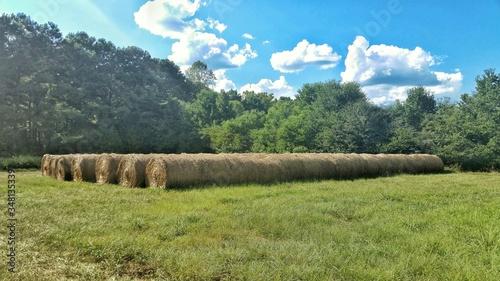Obraz na plátně Hay Bales Arranged On Grassy Field Against Trees