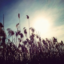 Field Of Feather Grass Against...