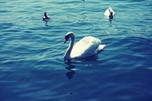 Birds Swimming On Lake