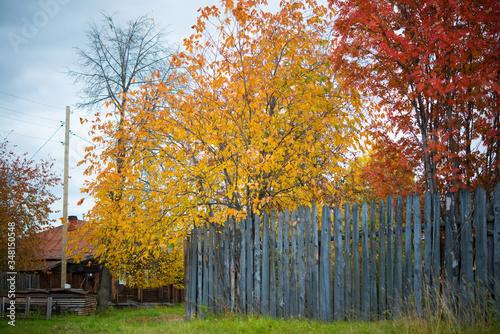 Golden autumn in rural areas, Russia, Ural © Evgenija