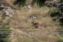 Deer Jumping On Mountainside