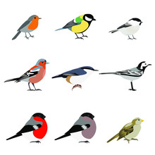 Set Of Birds Vector: Robin, Great Tit, Chickadee, Finch, Nuthatch, White Wagtail, Bullfinch, Sparrow. Isolated On White Background