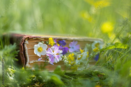 Old hardback book in the meadow with wildflowers growing out of pages Slika na platnu