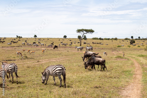 Kenia, Tiersafari, Tiere, Nationalpark, Safari