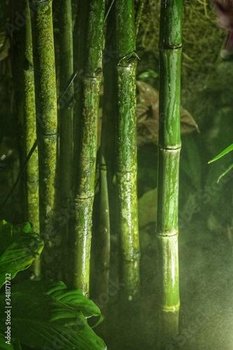Close-up Of Bamboos Growing Outdoors Poster Mural XXL