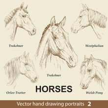 Set Of Hand Drawing Horses 2